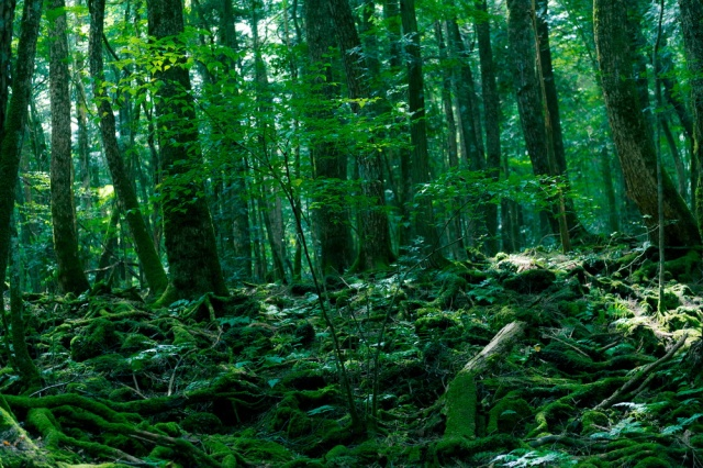 """Được nhắc đến với tên gọi """"Nơi hoàn hảo để chết"""" trong cuốn sách """"Những hướng dẫn đầy đủ để tự vẫn"""" của nhà văn Wataru Tsurumui, Aokigahara là một khu rừng nhỏ tối tăm dưới chân núi Phú Sĩ."""