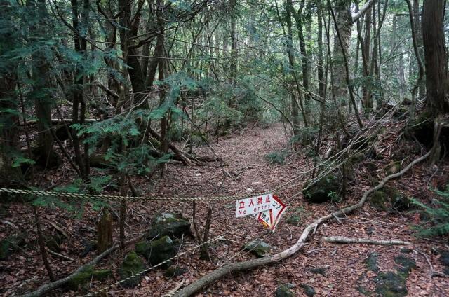 Thảm rừng ở cánh rừng Aokigahara dày đặc, vô số cây mọc chen che hết ánh nắng giữa ban ngày và chắn hết các ngọn gió… rất có thể là lý do khiến nơi đây trở thành điểm nổi tiếng để người ta tự sát.