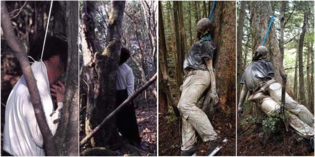 Ở trạm kiểm lâm khu rừng có hẳn một phòng để chứa xác. Số vụ tự sát vào khoảng 20 xác mỗi năm, nhưng tăng lên 57 vụ từ năm 1994 và năm 2004 đạt con số kỷ lục 108 xác. Theo hồ sơ của cảnh sát địa phương, 247 người đã cố tự tử trong rừng Aokigahara năm 2010 và 54 người đã đạt được mục đích. Quan chức địa phương và người dân tin rằng, con số thực tế còn cao hơn nhiều.