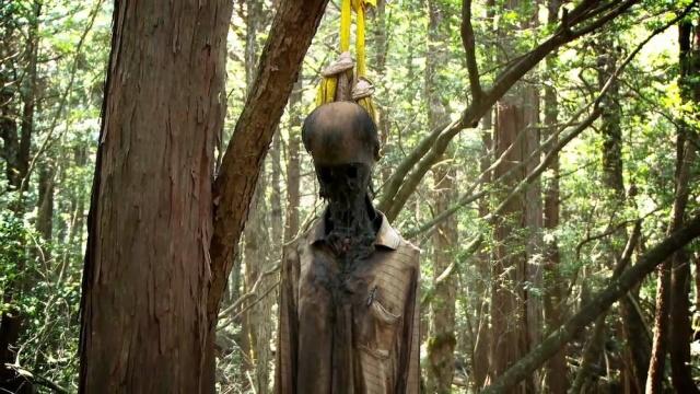 Những cư dân địa phương cho biết, họ vẫn thường xuyên nhắc nhở những ai đến đây đều phải cẩn thận khi đi vào rừng kể cả từ những người thợ săn cho đến những người có ý định không bao giờ muốn quay trở lại.Thật đáng tiếc là chúng không có hiệu lực mấy đối với những người đã đặt chân đến nơi này.