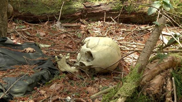 """Một số khác tin rằng, Aokigahara có liên quan đến... quỷ dữ. Nhiều câu chuyện kể lại, rừng Aokigahara là nơi sống của những linh hồn người chết yểu hoặc bị đột tử.Gốc cây là nơi chứa những nguồn năng lượng tiêu cực, ma quỷ trong rừng đã """"thúc"""" bất cứ ai tới đây cũng buồn chán và nghĩ đến chuyện tự sát, không cho họ thoát ra khỏi cánh rừng."""
