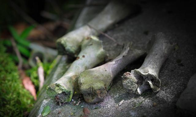 """Khu rừng còn có tên """"Jukai"""" (hay """"Biển cây"""") là một trong số ít rừng nguyên sinh còn lại của Nhật. Nền đất chủ yếu là đá núi lửa, nhiều hang hốc. Nhiều người cho rằng, mọi thứ bắt đầu sau khi nhà văn Seicho Matsumoto xuất bản cuốn tiểu thuyết Black Sea Trees vào năm 1960."""